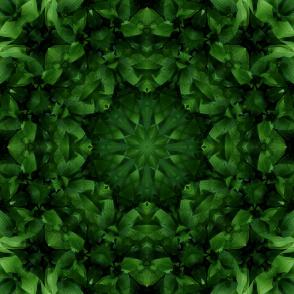beautiful green mandala