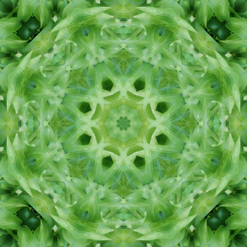 beautiful light green mandala