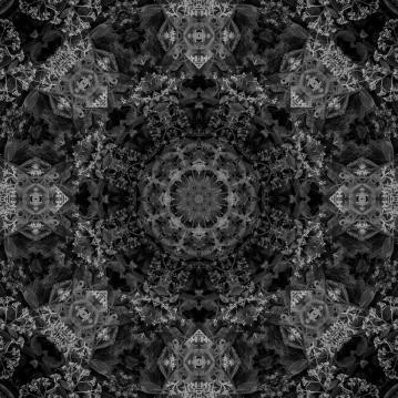 dark plant mandala-2
