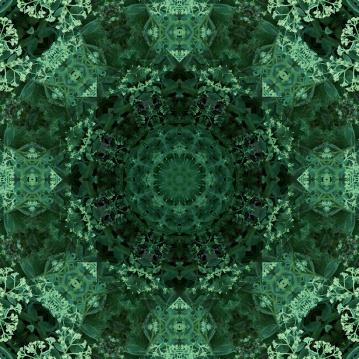 dark plant mandala