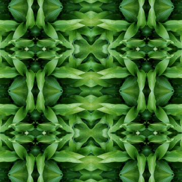 green plant mandala