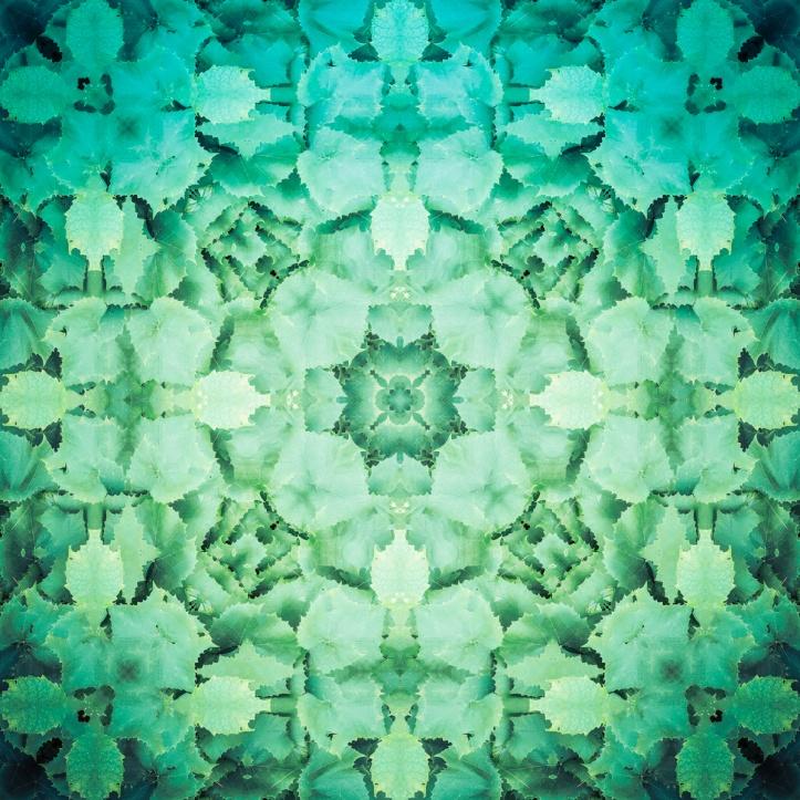 light green leaves-2