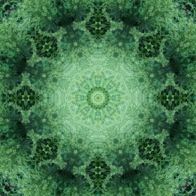 plant mandala 2