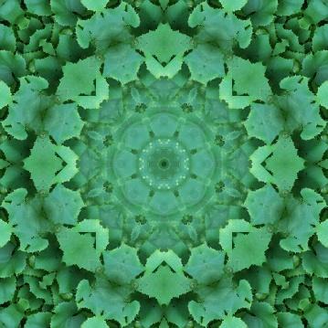 plant mandala 7